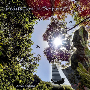 Ariel Kalma 『Meditation in the Forest』